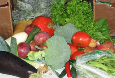 Stillmans farm CSA box delivered fresh massachusetts