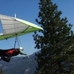 A white hang glider with green outline flies past a tall green tree.