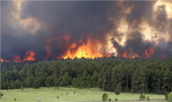 Black Forest fire, afternoon of June 11, 2013